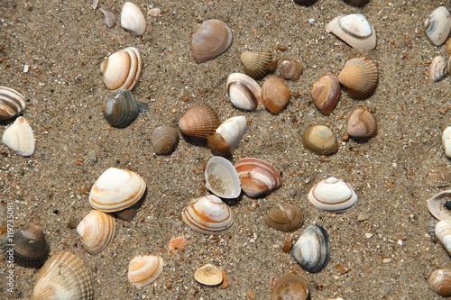 Ostseestrand mit Muscheln