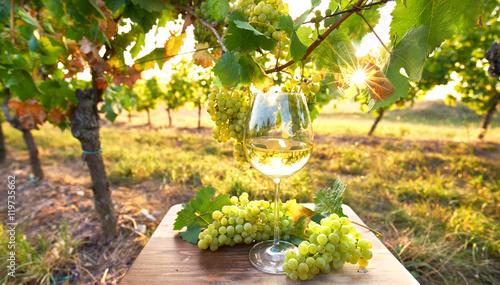 Plakat Wineglass w świetle słonecznym, jesień w winnicy
