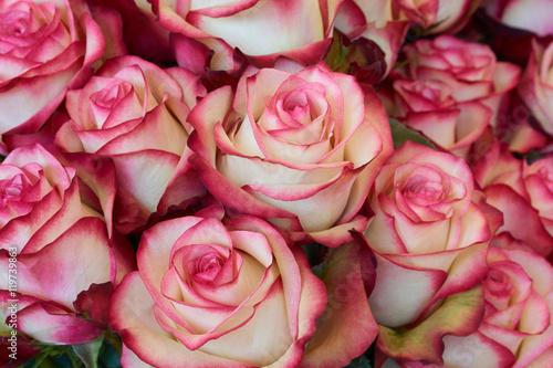 Foto  Heap of roses