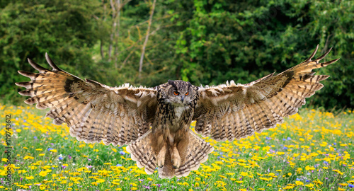 La pose en embrasure Chouette Eagle owl