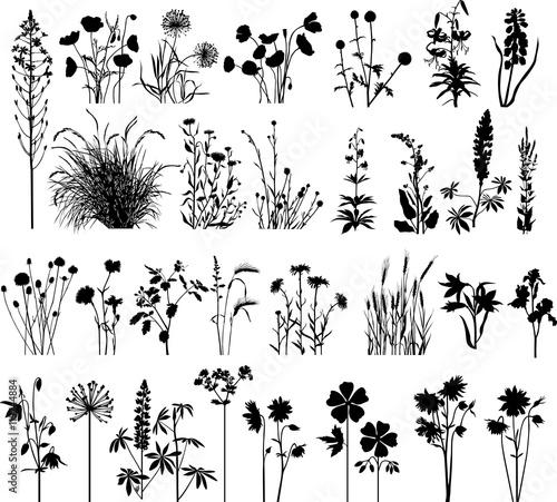 Big floral set - 119744884