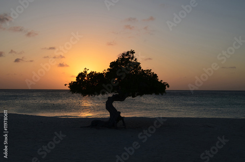 Photo  Tranquil Waters at Sunset and a Divi Divi Tree