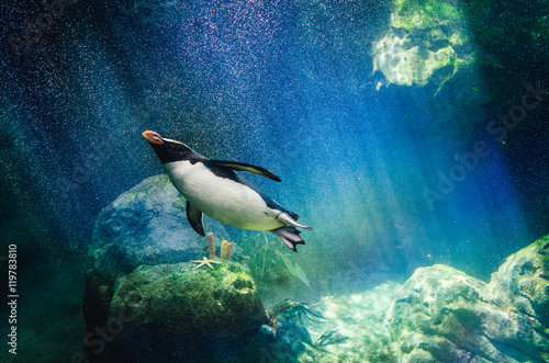 Staande foto Pinguin Penguin diving