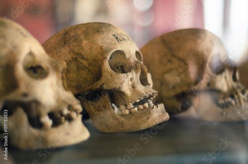 Skulls of dead people Canvas Print