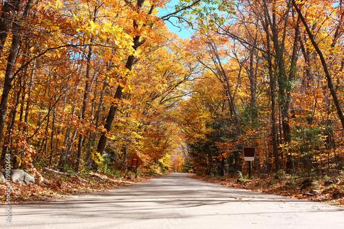 Poster Oranje eclat Autumn scene with road