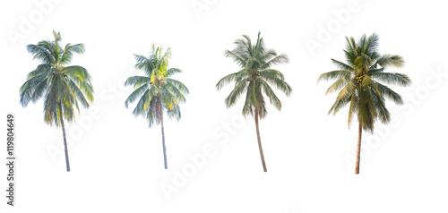 Aluminium Prints Palm tree coconut trees on white background