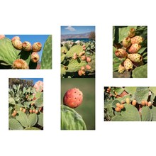 6 Phothos Collage Of Ripe Pric...