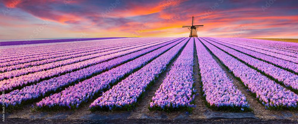 Dramatic spring scene on the flowers farm.