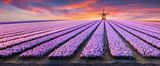 Fototapeta Tulipany - Dramatic spring scene on the flowers farm.