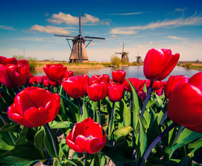 Panel Szklany Tulipany The famous Dutch windmills.