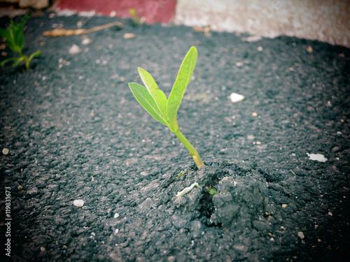 Fotografía  A young plant growing through concrete pavement.