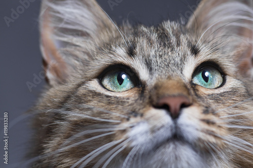 Fotobehang Kat muzzle of a beautiful cat with green eyes o