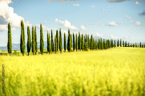 Poster Jaune Beautiful tuscan landscape view with cypress alley in Italy