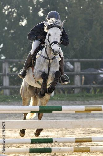 saut d'obstacle en équitation