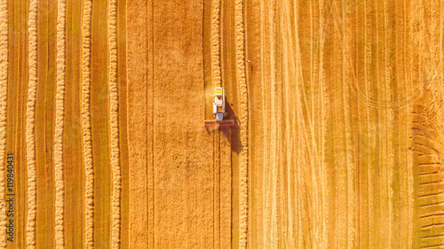 Tuinposter Cultuur Harvester machine working in field . Combine harvester agriculture machine harvesting golden ripe wheat field. Agriculture. Aerial view. From above.