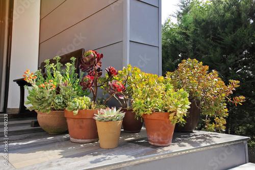Assortiment Plantes Grasses En Pot Sur Terrasse Maison Au