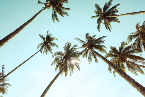 Tuinposter Palm boom Palm trees at tropical coast with vintage toned
