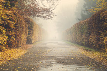 Autumn In The Park, Yellow Leaves On The Avenues.Toned With A Retro Vintage  Effect.