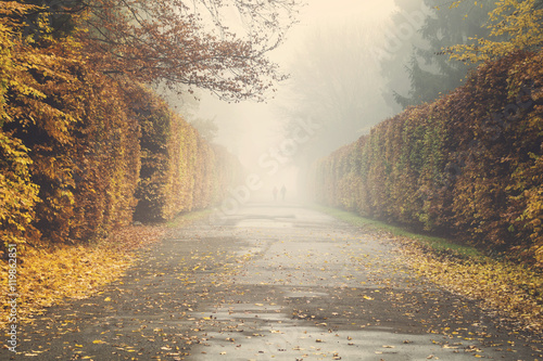 Fotografie, Obraz  autumn in the park, yellow leaves on the avenues