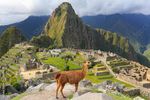 Llama standing at Machu Picchu overlook in Peru Canvas Print