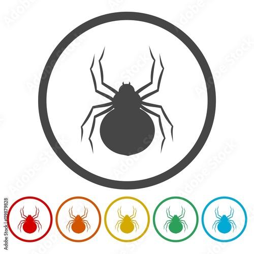 Fotografie, Obraz  Set of silhouette spider icon
