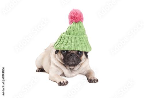 Poster Dog lief aandoenlijk hondje, mopshond, met groene gebreide muts en roze pompon