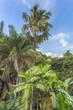 végétation tropicale aux Seychelles