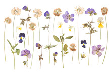 Dry Pressed Wild Flowers Isola...