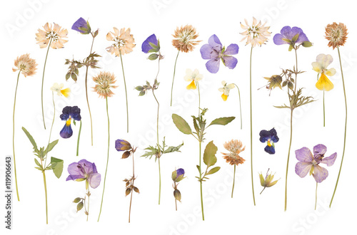 Fotografie, Obraz Dry pressed wild flowers isolated on white background