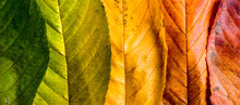 Autumn Composition, Colorful L...