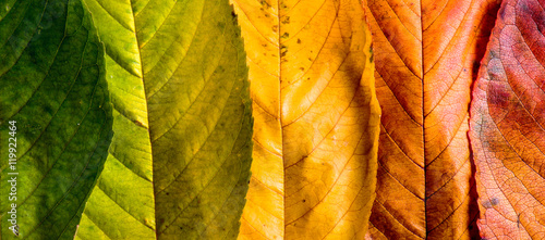 Autumn composition, colorful leaves in a row. Studio shot. - 119922464