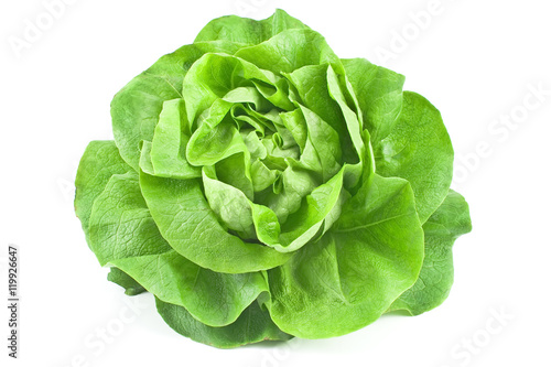 Fototapeta Fresh lettuce isolated on white  background obraz