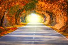 Autumn Fall Road Landscape - Trees Tunne And Magic Light