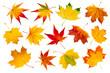 Leinwandbild Motiv Bunte Herbstblätter Collage vor weißem Hintergrund