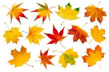 Bunte Herbstblätter Collage Vor Weißem Hintergrund