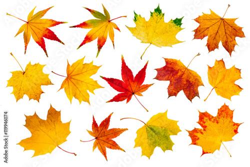Fotografía  Bunte Herbstblätter Collage vor weißem Hintergrund