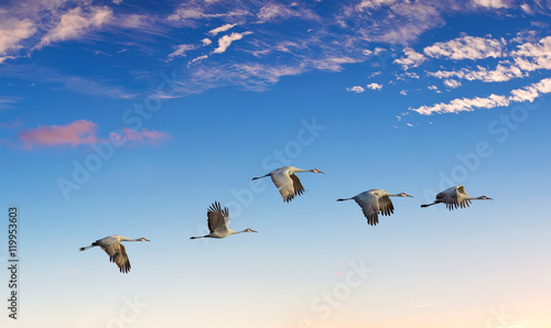 Landscape during sunset with flying birds panoramic view - 119953603