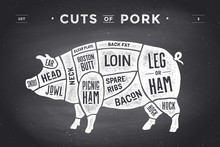 Cut Of Meat Set. Poster Butcher Diagram, Scheme And Guide - Pork. Vintage Typographic Hand-drawn. Illustration.