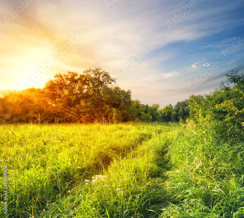 Fotobehang Geel Road in green grass of the forest