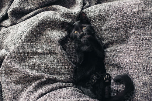 Papel de parede  Kitten on blanket