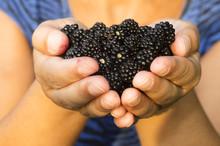 Fresh Ripe Blackberry , Mulberry Fruit , In Hands Of Unfocused Woman