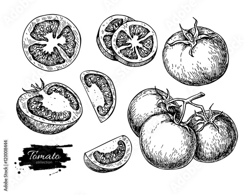 Foto Tomato vector drawing set. Isolated tomato, sliced piece vegetab