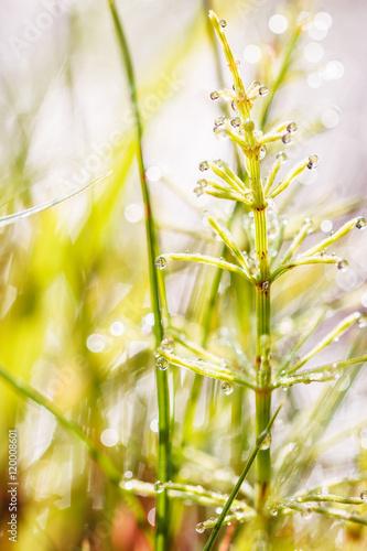 Foto op Plexiglas Tulp Closeup dew on grass