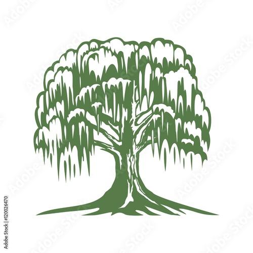 Photo Banyan Tree