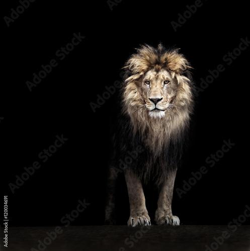 Fototapeta Portrait of a Beautiful lion, lion in the dark obraz na płótnie