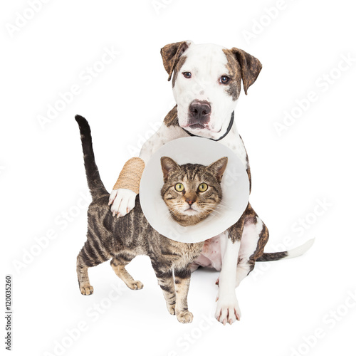 Photo  Injured Dog and Cat Together