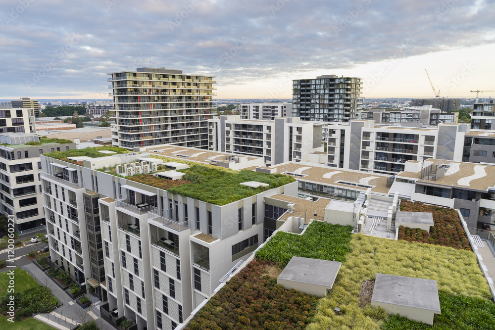 Fototapety, obrazy: View of green roof on modern buildings in Sydney, Australia