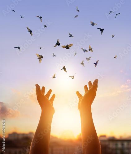Foto En Lienzo - Woman praying and free bird enjoying nature in sunset background