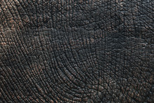 Elephant Skin Texture Black And White Or Background.