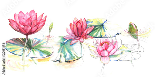 Hand Drawn Watercolor Illustration Of The Pink Lotus Flowers And